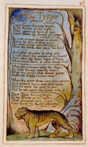Unione testo e immagine in Tiger